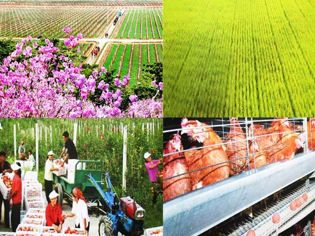 Sukchon Agricultural Development Zone