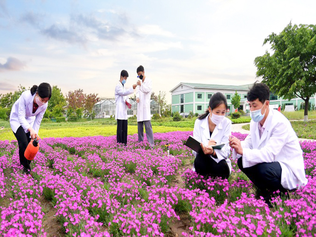 Intensifying the research on ornamental plant and ground cover plant