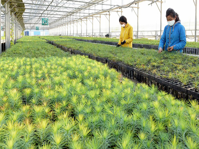 Sapling production base contributing a share to forestation and landscape architecture of the country